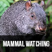 Mammal watching
